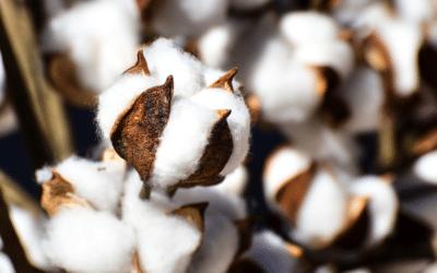 Conseils d'entretien textile bio